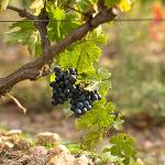 Terroir vinicole Saint Julien d'Aille