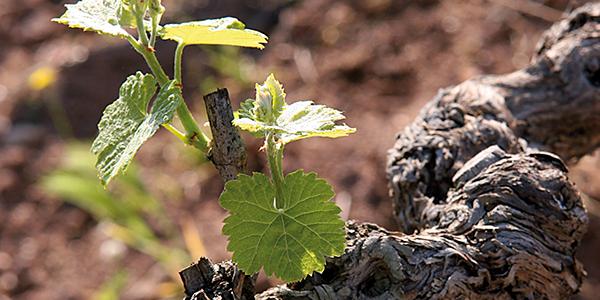 Terre Vin Saint Julien d'Aille